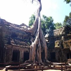angelina-jolie-tree