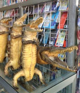 crocodile-figures